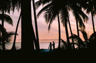 siluety para palmy 129288 1280x720 335x220 - Нейродермит народные способы лечения